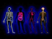 Minerals for Healthy Bones, Organs, and Tissue